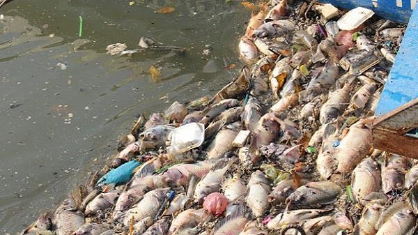 Cá chết hàng loạt trên kênh Nhiêu Lộc – Thị Nghè