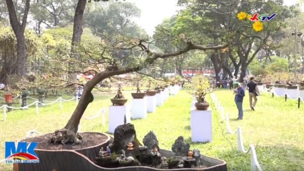 Xuất hiện cây mai 4 tỷ gây xôn xao dư luận ở Hội chợ hoa xuân Tao Đàn (TP. Hồ Chí Minh)