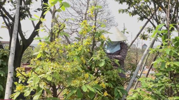 Người Sài Gòn không ngại chi tiền triệu thuê người chăm sóc mai sau Tết