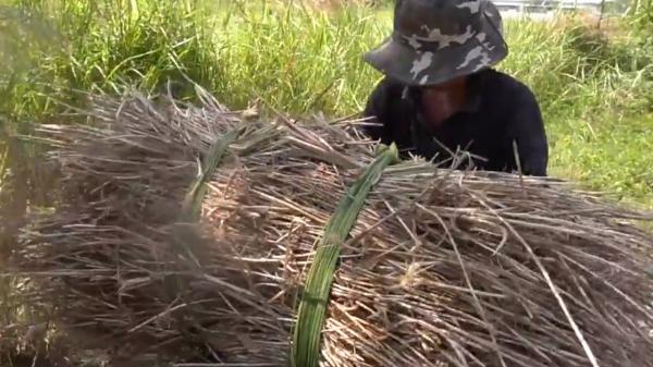 Nghề đào rễ tranh cực nhọc mùa nóng ở Sài Gòn