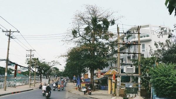 Cây gòn mùa trái rụng và nguồn gốc tên gọi của một vùng đất mang tên Sài Gòn