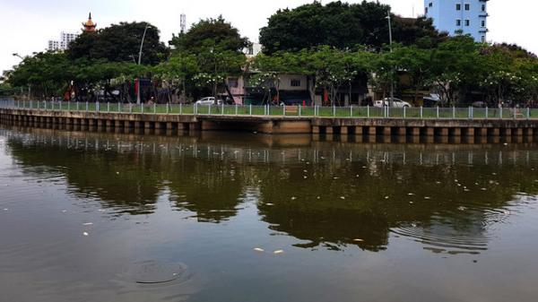 Cá c.h.ế.t trắng kênh Nhiêu Lộc - Thị Nghè