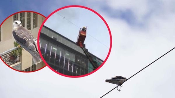 Cả khu phố ở Sài Gòn chung tay giải cứu một chú chim lớn mắc kẹt trên dây điện nhiều ngày