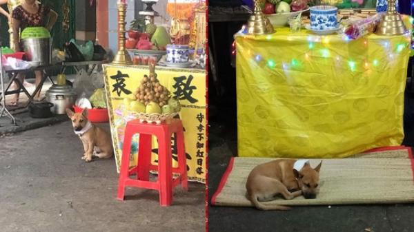Hình ảnh xúc động ở Sài Gòn: Chủ vừa qua đời, chú chó nhỏ buồn bã bỏ cả ăn để túc trực bên linh cữu không chịu rời