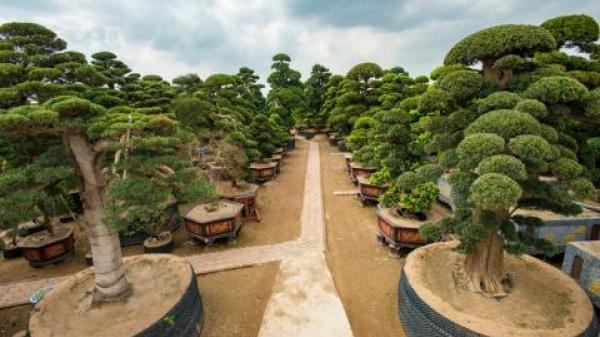 Điều cay đắng tại vườn cây 2.000 tỷ của đại gia Trà Vinh Trầm Bê