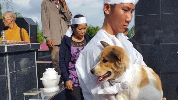 """Câu chuyện uất hận về chú chó đang để tang bà chủ thì bị """"cẩu tặc"""" bắt mất"""