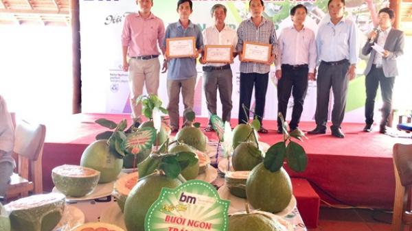 Bến Tre: Nhà vườn Bùi Văn Chỉnh đạt giải nhất hội thi Trái ngon - Trái đẹp