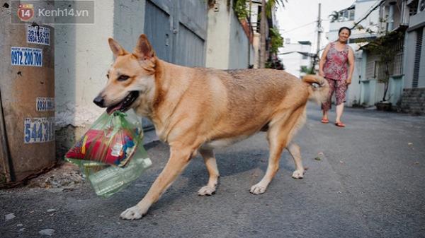 Gặp Gấu - chú chó cá tính nhất Sài Gòn: Chủ mua gì cũng xung phong xách hộ, không cho đi theo thì hờn mát bỏ ăn!