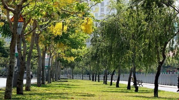 Sài Gòn có phố hoa vàng