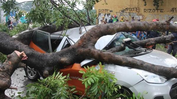 Cây cổ thụ bật gốc đè bẹp ô tô giữa Sài Gòn