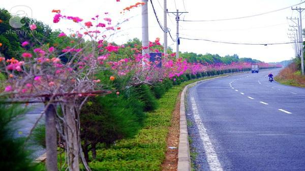 Ven Sài Gòn, có một con đường thơ mộng ngập tràn hoa giấy