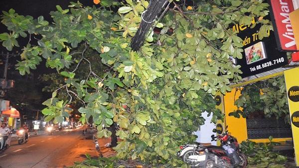 TP. HCM: Cây xanh gẫy đổ trong mưa lớn gây mất điện