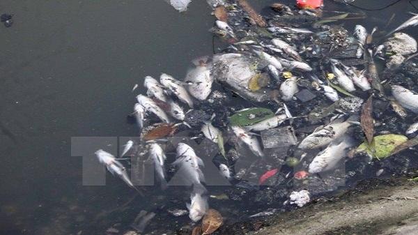 Cá chết hàng loạt, nước chuyển màu ở thượng nguồn sông Sài Gòn