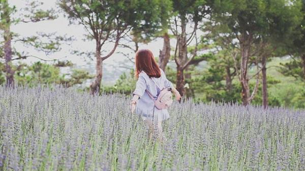Hãy đi chơi Đà Lạt ngay vì mùa hoa oải hương đã cận kề rồi!