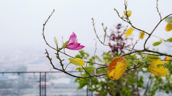 Sài Gòn se lạnh, chìm trong mờ sương mù như Sa Pa