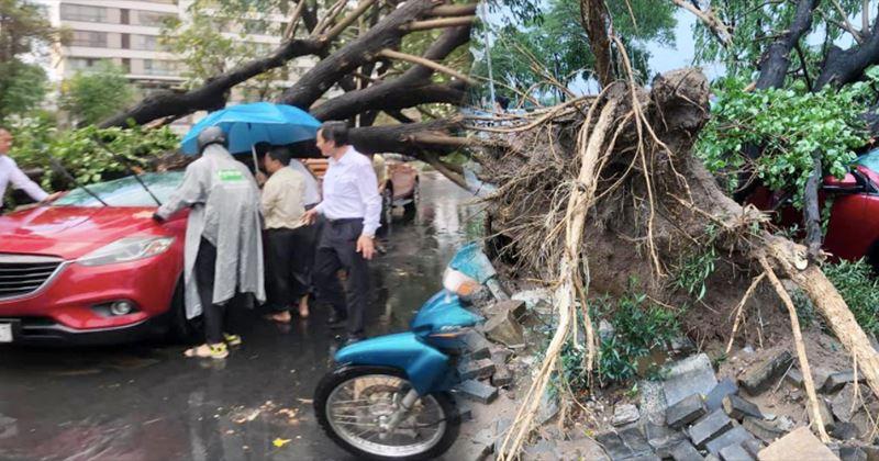 TP.HCM: Hiện trường cây đổ bật gốc đè bẹp ô-tô trong cơn mưa tầm tã