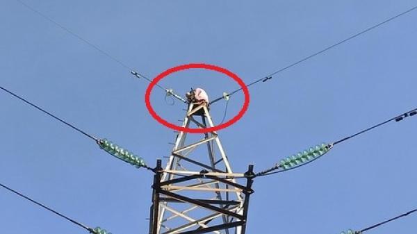 Người phụ nữ trèo lên cột điện cao thế ở Sài Gòn, nói lảm nhảm, cố thủ