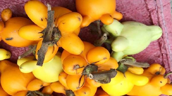 CẢNH BÁO: Thứ quả trồng nhiều ở miền Tây chứa chất kịch độc nhưng vẫn được tìm mua để bày mâm ngũ quả