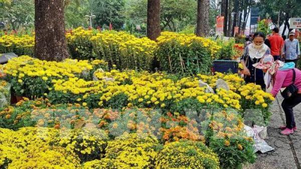 Trà Vinh: Hoa Tết giá tăng gấp đôi vẫn hút khách