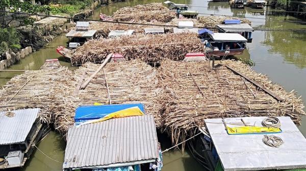 Trà Vinh: Người dân khốn khổ vì nhà máy chậm thu mua mía