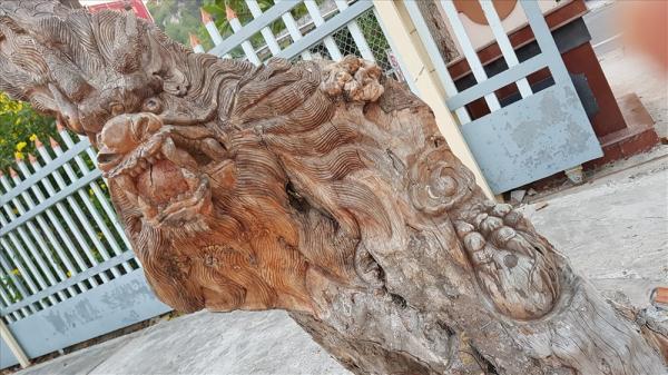 """Mền Tây: KINH NGẠC cây tươi bỗng """"hóa rồng"""""""