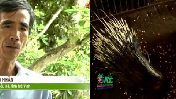 Clip: Lão nông Trà Vinh thu nhập hàng trăm triệu đồng mỗi tháng nhờ nuôi nhím