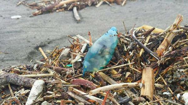 Nhìn thấy thứ xanh, đẹp này trên bãi biển, tuyệt đối không động...