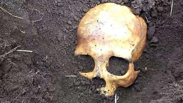 KINH HOÀNG: Đào thấy hộp sọ khi làm vườn, cụ ông chết lặng khi biết đó là chồng cũ của vợ