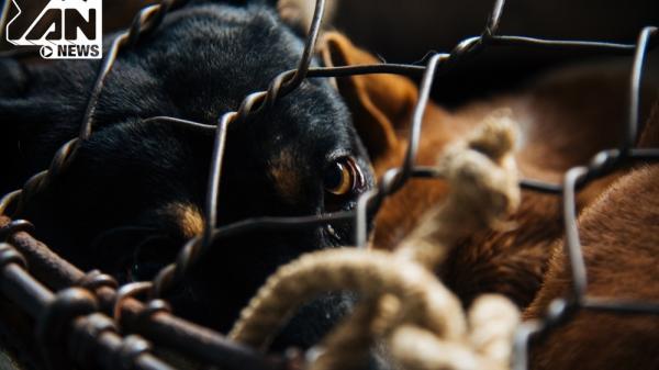 Ám ảnh với những đôi mắt tại xóm giết mổ động vật nằm giữa lòng Sài Gòn