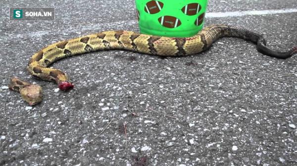 Dù đầu lìa khỏi thân, rắn độc vẫn ngóc dậy cắn người thập tử nhất sinh!