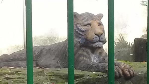 Con hổ bằng bê tông trong Thảo Cầm Viên, Sài Gòn bất ngờ nổi tiếng trên MXH vì biểu cảm xuất sắc