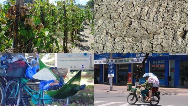 Nghệ An nắng nóng 40 độ: Cây chết khô, cuộc sống người dân đảo lộn