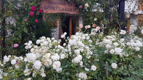 Gia đình quê Nghệ An sống trong nhà gỗ giữa vườn hồng 1.000 m2