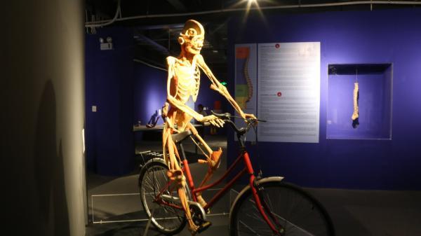 Tạm ngưng hoạt động triển lãm xác người thật ở Sài Gòn