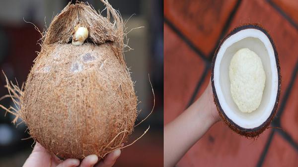 """Mộng dừa là gì mà giá cao """"cắt cổ"""", muốn mua cũng không hề dễ?"""