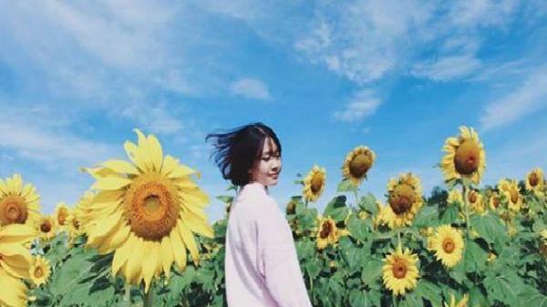 """Ngay gần Trà Vinh có vườn hoa hướng dương đẹp rực rỡ """"quên lối về"""" phải check-in ngay lập tức"""