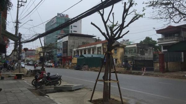 Lạ lùng tuyến phố có hàng cây trồng dưới lòng đường ở Quảng Ninh: Lý giải của Giám đốc