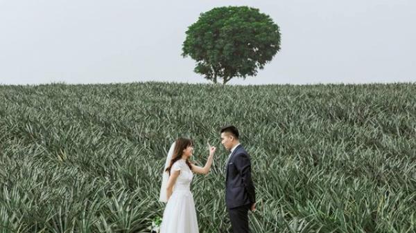 """Xuất hiện cánh đồng dứa lên hình đẹp đến """"rụng rời"""" chỉ cách Bắc Ninh không xa"""