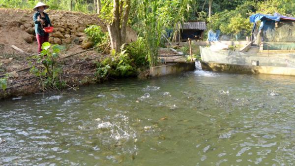 Lâm Bình (Tuyên Quang): Người nuôi cá 'tiến vua' trên đèo Ái Âu