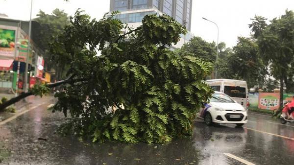 Ảnh hưởng của bão số 3, Hà Nội ngập nhiều tuyến phố, cây xanh gãy cành, bật gốc