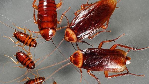 """Kiến, muỗi, gián tấn công - Đừng sợ! Sử dụng ngay 3 """"chiêu"""" cực hiệu quả này nhé"""