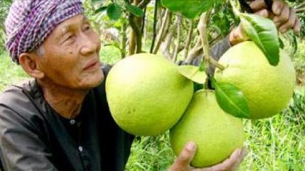 Chưa chính xác, ông Trần Văn Bưởi làm nghề buôn bán trên sông