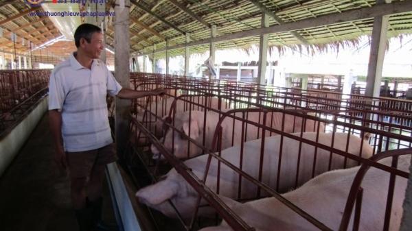 """Mang Thít (Vĩnh Long) : Có gì lạ ở trang trại """"Tám Hải""""?"""