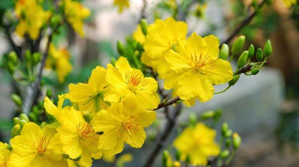 Nếu đang tìm điểm đến lý tưởng ngắm hoa dịp Tết này, đừng quên có một làng hoa Phước Định đẹp ngẩn ngơ ở Vĩnh Long