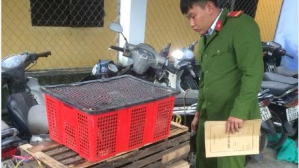 Bắt giữ xe khách vận chuyển trái phép hàng chục cá thể động vật hoang dã từ Vĩnh Long đi Móng Cái