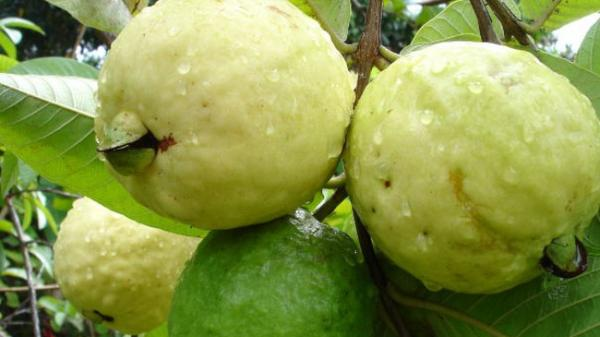 Ăn quá nhiều trái cây cũng không tốt, nhưng 5 loại quả này được khuyên nên ăn thường xuyên