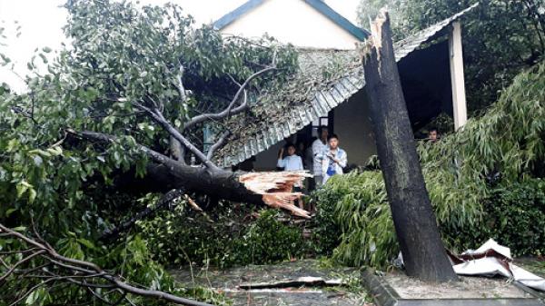 Tam Bình (Vĩnh Long) thiệt hại do thiên tai gần 3,89 tỷ đồng