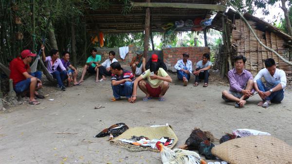 Tam Bình (Vĩnh Long): Bắt quả tang tụ điểm đá gà ăn tiền quy mô lớn
