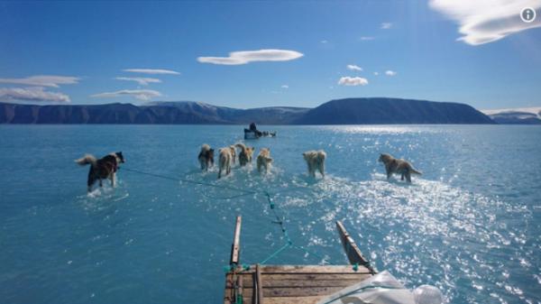 Greenland mất đi 2 tỷ tấn băng chỉ trong 1 ngày, chó kéo xe không còn băng tuyết để mà chạy