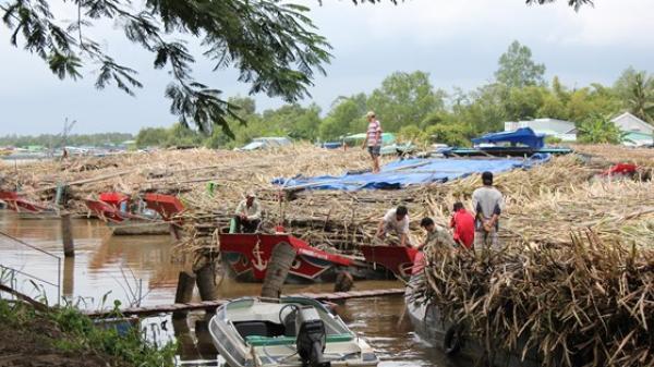 Cần Thơ: Nhá máy đường Vị Thanh đóng cửa trước vụ sản xuất mới